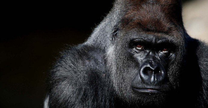 Tech: The rise of the 800 pound Gorilla!